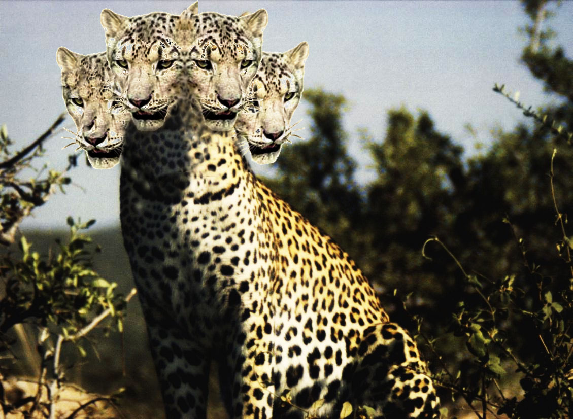 Real three headed animals